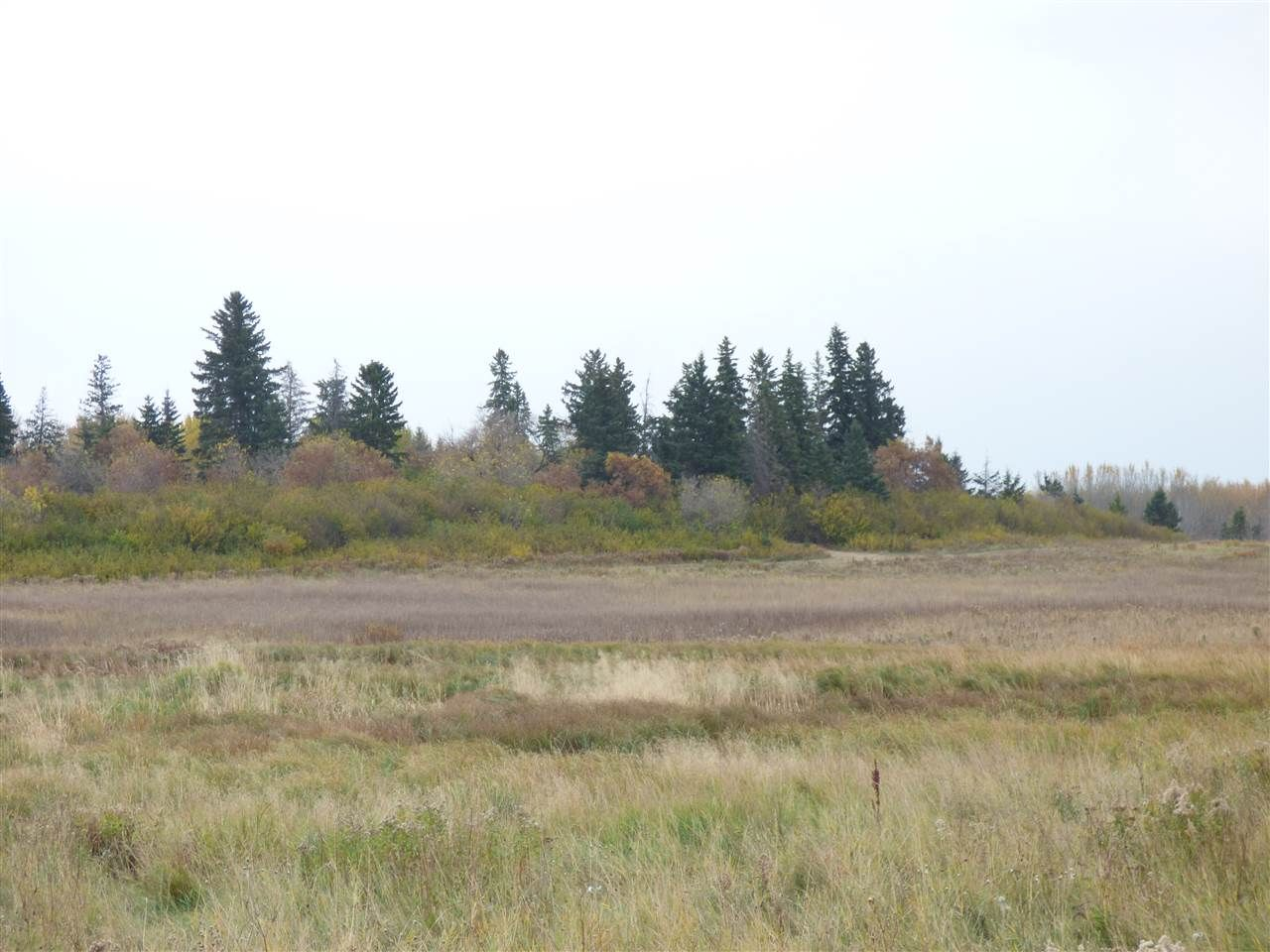 Photo 20: Photos: N1/2 SE19-57-1-W5: Rural Barrhead County Rural Land/Vacant Lot for sale : MLS®# E4217154