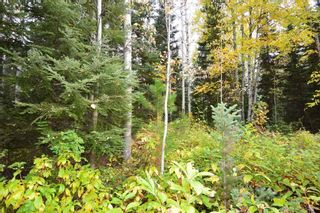 """Photo 8: Lot 8 GLACIER VIEW Road in Smithers: Smithers - Rural Land for sale in """"Silvern Estates"""" (Smithers And Area (Zone 54))  : MLS®# R2410914"""