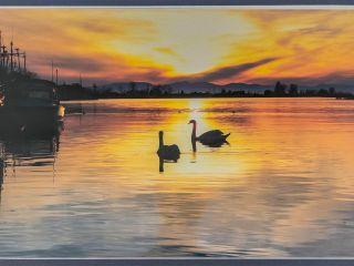 Photo 22: 107 4753 W RIVER Road in Delta: Ladner Elementary Condo for sale (Ladner)  : MLS®# R2455745