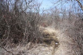Photo 8: 2nd Line in Roseneath: Land Only for sale : MLS®# 188329