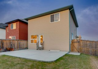 Photo 38: 135 SADDLERIDGE Close NE in Calgary: Saddle Ridge Detached for sale : MLS®# A1101462