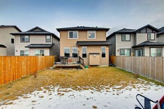 Photo 31: 356 SKYVIEW SHORES Manor NE in Calgary: Skyview Ranch Detached for sale : MLS®# C4277892