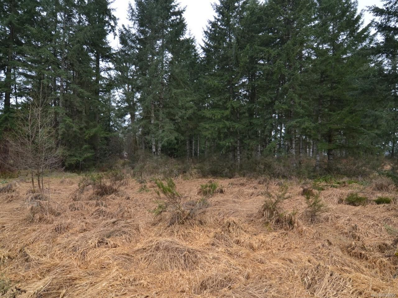 Photo 5: Photos: Lot A Ulverston Ave in CUMBERLAND: CV Cumberland Other for sale (Comox Valley)  : MLS®# 836956