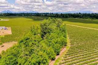 Photo 3: 21.44AC 240 STREET in Langley: Langley City Agri-Business for sale : MLS®# C8038637