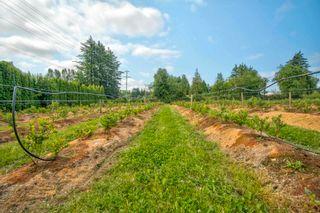 Photo 14: 3155 BRADNER Road in Abbotsford: Aberdeen Agri-Business for sale : MLS®# C8039365