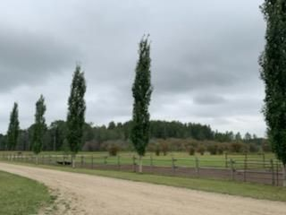 Photo 18: 461028 RR 74: Rural Wetaskiwin County House for sale : MLS®# E4252935