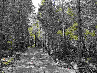 Photo 4: 740 EAGLES REST Lane: Galiano Island Land for sale (Islands-Van. & Gulf)  : MLS®# R2586632