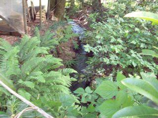 Photo 3: 66563 SUMMER ROAD in Hope: Hope Kawkawa Lake Land for sale : MLS®# R2568024
