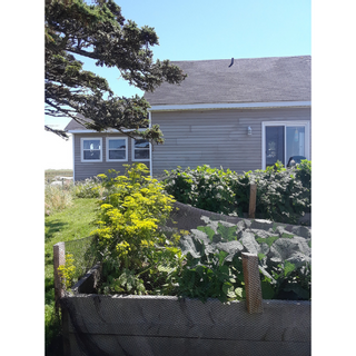 Photo 22: 179 Hawk Point Road in Clark's Harbour: 407-Shelburne County Residential for sale (South Shore)