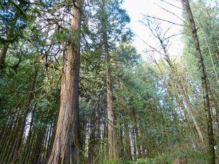 Photo 5: 25389 98 Avenue in Maple Ridge: Thornhill MR Land for sale : MLS®# R2537550