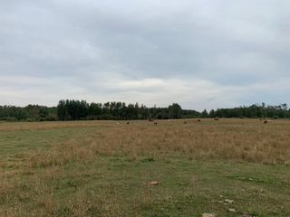 Photo 6: RR 275 Twp 482: Rural Leduc County Rural Land/Vacant Lot for sale : MLS®# E4261137