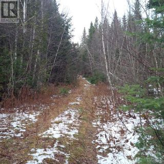 Photo 9: - Yourette Road in Dewolfe: Vacant Land for sale : MLS®# NB062662