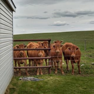 Photo 47: 140043 RANGE ROAD 250: Rural Vulcan County Detached for sale : MLS®# A1049788