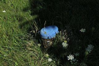 Photo 9: 172 Glenarm Road in Kawartha Lakes: Rural Eldon Property for sale : MLS®# X3017190