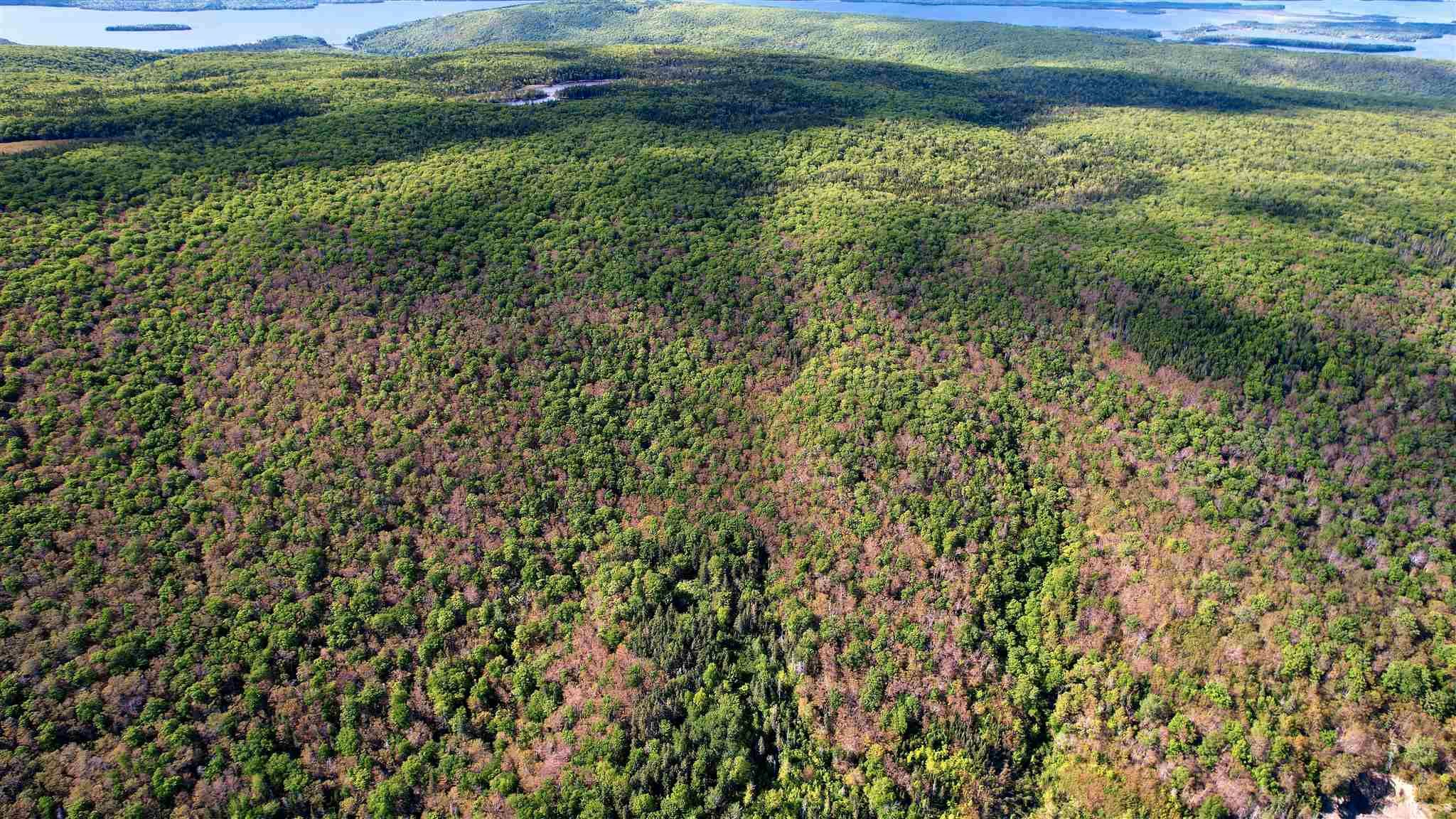 Photo 7: Photos: Marble Mountain Road in Marble Mountain: 306-Inverness County / Inverness & Area Vacant Land for sale (Highland Region)  : MLS®# 202116732