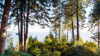 Photo 7: 1055 & 1057 GOWER POINT Road in Gibsons: Gibsons & Area House for sale (Sunshine Coast)  : MLS®# R2552576