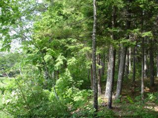 Photo 9: Lot 11 RAFUSE POINT Road in Pleasantville: 405-Lunenburg County Vacant Land for sale (South Shore)  : MLS®# 202100151