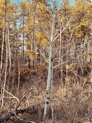 Photo 3: Over one acre lots in Hudson Bay: Lot/Land for sale : MLS®# SK850477