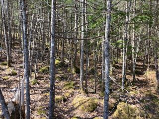 Photo 11: 65 Eaglet Lane in Musquodoboit Harbour: 35-Halifax County East Vacant Land for sale (Halifax-Dartmouth)  : MLS®# 202109854