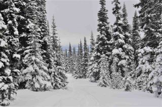 """Photo 13: 217 PRAIRIE Road in Smithers: Smithers - Rural Land for sale in """"Hudson Bay Mountain Resort"""" (Smithers And Area (Zone 54))  : MLS®# R2545464"""