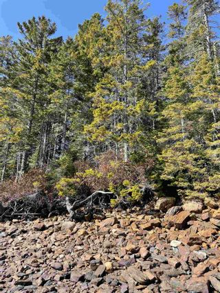 Photo 8: Highway 332 in Bayport: 405-Lunenburg County Vacant Land for sale (South Shore)  : MLS®# 202118989
