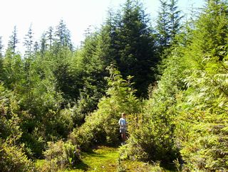 Photo 5: Lot 15 Helby Island: Bamfield Land for sale (Vancouver Island)  : MLS®# 862123