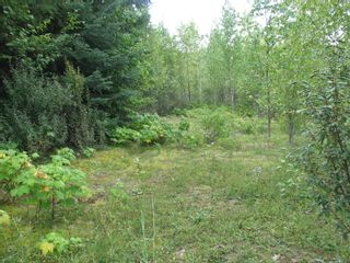 Photo 7: Lot 22 Ridge Road: Eagle Bay Land Only for sale (Shuswap)  : MLS®# 10167444