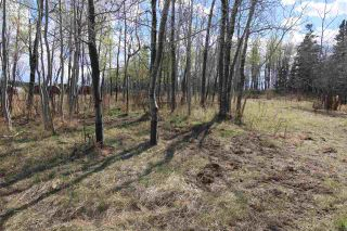 Photo 7: 57032 RR 50: Rural Lac Ste. Anne County Rural Land/Vacant Lot for sale : MLS®# E4244016