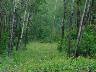 Photo 7: Lot 7 27331 Township Road 481: Rural Leduc County Rural Land/Vacant Lot for sale : MLS®# E4243091
