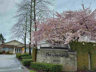 """Photo 39: 124 16233 82ND Avenue in Surrey: Fleetwood Tynehead Townhouse for sale in """"THE ORCHARDS"""" : MLS®# R2583227"""