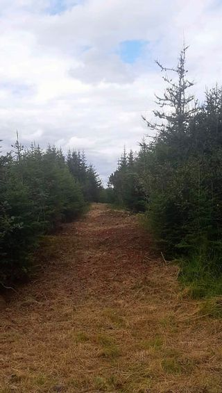 Photo 13: 0 Louisbourg Highway in Louisbourg: 207-C. B. County Vacant Land for sale (Cape Breton)  : MLS®# 202102405
