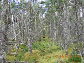 Photo 14: Lot 03-1A Highway 7 in Marie Joseph: 303-Guysborough County Vacant Land for sale (Highland Region)  : MLS®# 201917799