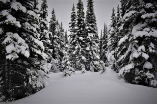 """Photo 4: 217 PRAIRIE Road in Smithers: Smithers - Rural Land for sale in """"Hudson Bay Mountain Resort"""" (Smithers And Area (Zone 54))  : MLS®# R2545464"""
