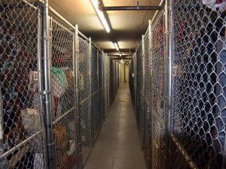 Photo 34: 203 950 LORNE STREET in : South Kamloops Apartment Unit for sale (Kamloops)  : MLS®# 137729