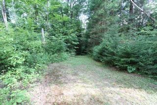 Photo 14: 300 Pinery Road in Kawartha Lakes: Rural Somerville Property for sale : MLS®# X4840235