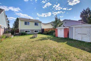Photo 42: 80 Aberfoyle Close NE in Calgary: Abbeydale Detached for sale : MLS®# A1137613