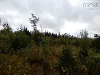 Photo 5: Tanner Hill Road in Limerock: 108-Rural Pictou County Vacant Land for sale (Northern Region)  : MLS®# 202121301