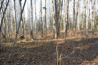 Photo 10: LOT A KLOECKNER Road in Smithers: Smithers - Rural Land for sale (Smithers And Area (Zone 54))  : MLS®# R2598861