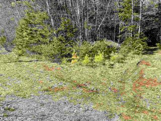 Photo 20: Lot VH-1 Highway 10 in Meisners Section: 405-Lunenburg County Vacant Land for sale (South Shore)  : MLS®# 202111350