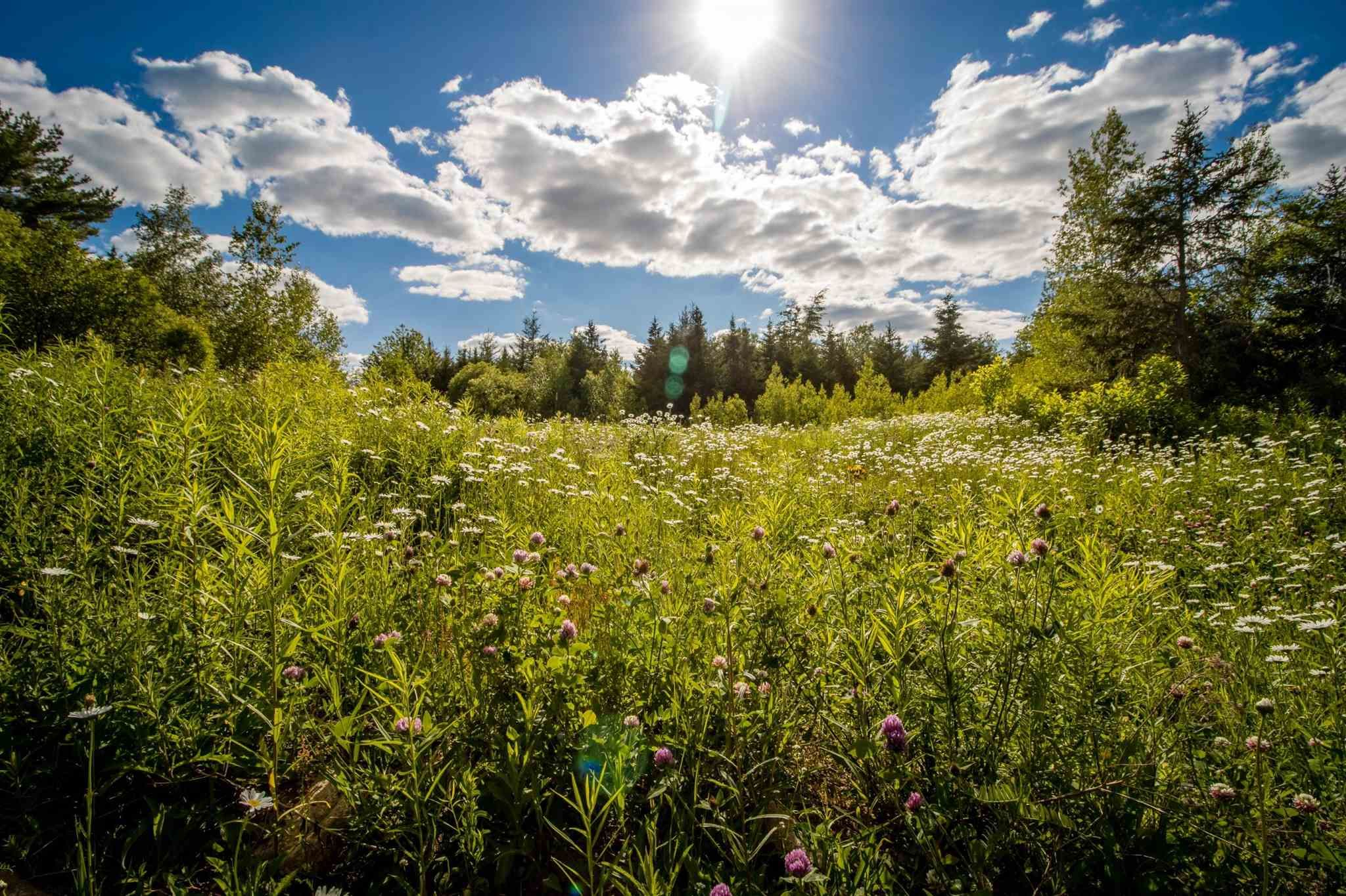 Main Photo: Lot A3 Aylesford Road in Lake Paul: 404-Kings County Vacant Land for sale (Annapolis Valley)  : MLS®# 202115391