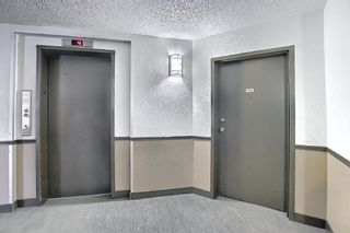 Photo 34: 110 11 Dover Point SE in Calgary: Dover Apartment for sale : MLS®# A1096781