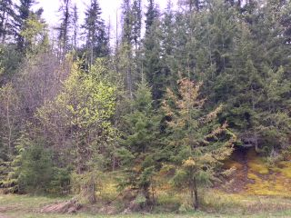 Photo 19: 3,4,6 Armstrong Road in Eagle Bay: Vacant Land for sale : MLS®# 10133907