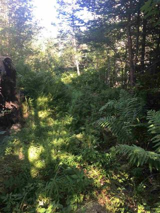 Photo 17: Lot Highway 3 in East Green Harbour: 407-Shelburne County Vacant Land for sale (South Shore)  : MLS®# 202101579