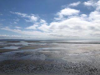 Photo 1: 1640 BEACH GROVE Road in Delta: Beach Grove House for sale (Tsawwassen)  : MLS®# R2577087