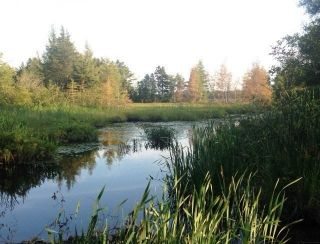 Photo 2: 0 Lake Road in Noel: 105-East Hants/Colchester West Vacant Land for sale (Halifax-Dartmouth)  : MLS®# 202113796