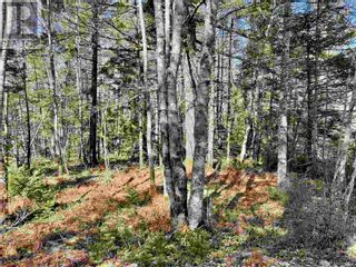 Photo 6: Lot 3 Highway 8 in Harmony: Vacant Land for sale : MLS®# 202108277