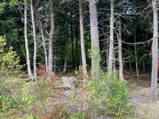 Photo 6: 1504 Greenvale Road in Macphersons Mills: 108-Rural Pictou County Vacant Land for sale (Northern Region)  : MLS®# 202122532