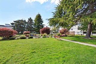 "Photo 19: 106 3451 SPRINGFIELD Drive in Richmond: Steveston North Condo for sale in ""ADMIRAL COURT"" : MLS®# R2383223"
