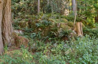 Photo 61: 1467 Milstead Rd in : Isl Cortes Island House for sale (Islands)  : MLS®# 881937