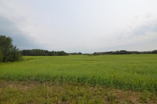 Photo 5: Range Rd 180 & Township Rd 552: Rural Lamont County Rural Land/Vacant Lot for sale : MLS®# E4258168